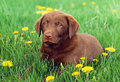 PUP 05 GR0139 01