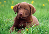 PUP 05 GR0140 01