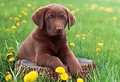 PUP 05 GR0143 01