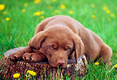 PUP 05 GR0144 01