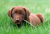 PUP 05 GR0151 01