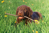 PUP 05 GR0152 01