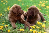 PUP 05 GR0153 01