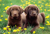 PUP 05 GR0154 01