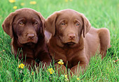 PUP 05 GR0156 01