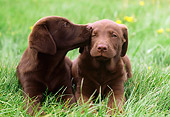 PUP 05 GR0157 01