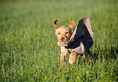 PUP 05 GR0160 01