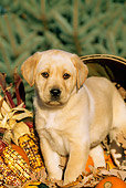 PUP 05 LS0002 01