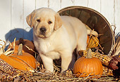 PUP 05 LS0006 01