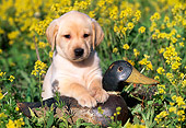 PUP 05 LS0008 01
