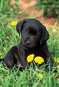 PUP 05 LS0011 01