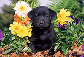 PUP 05 LS0012 01
