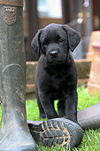 PUP 05 NR0009 01
