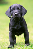 PUP 05 NR0016 01