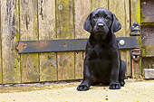 PUP 05 NR0017 01