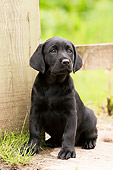 PUP 05 NR0019 01
