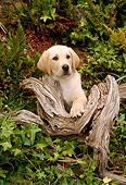PUP 05 RC0001 01