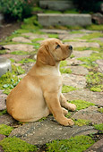 PUP 05 RC0003 01