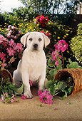 PUP 05 RC0005 01