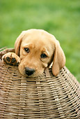 PUP 05 RC0006 01