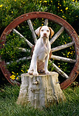 PUP 05 RC0007 01