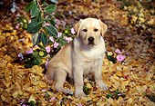 PUP 05 RK0016 06