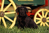 PUP 05 RK0050 03