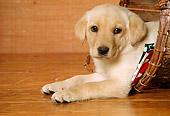 PUP 05 RK0058 09