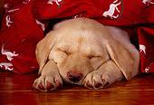 PUP 05 RK0060 06