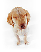 PUP 05 RK0072 14