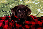 PUP 05 RK0085 01