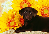 PUP 05 RK0087 08
