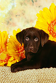 PUP 05 RK0087 11