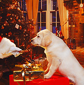 PUP 05 RS0002 03