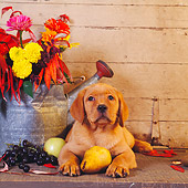 PUP 05 RS0023 02