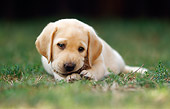 PUP 05 SS0001 01