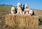 PUP 06 AB0001 01