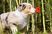 PUP 06 AC0001 01