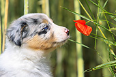 PUP 06 AC0002 01