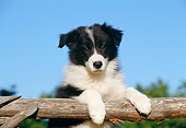 PUP 06 CB0003 01
