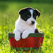 PUP 06 KH0001 01