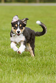 PUP 06 NR0003 01