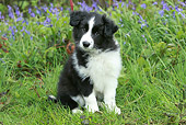 PUP 06 NR0004 01