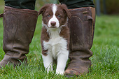PUP 06 NR0008 01