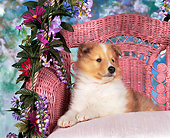 PUP 06 RK0026 03