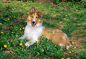PUP 06 CE0001 01