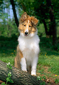 PUP 06 CE0002 01