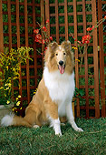 PUP 06 CE0003 01