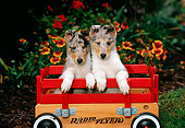 PUP 06 CE0004 01