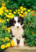PUP 06 CE0010 01